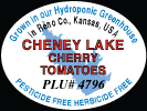 Cheney Lake Cherry Tomatoes